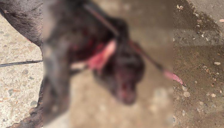 Perro, maltrato animal, policía, denuncia